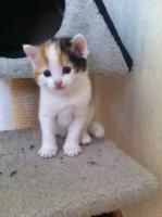 Foto 2 6 BKH Katzenbabys