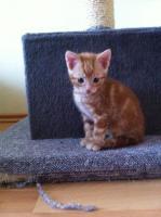 Foto 4 6 BKH Katzenbabys