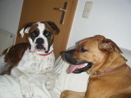 Hundeeltern