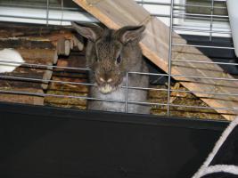 Foto 2 6 hübsche Kaninchenbabys, 10 Wo. alt, suchen dringend ein Zuhause!