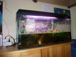 Foto 4 60 Liter Aquarium mit einem blauen Feuerbachmolch