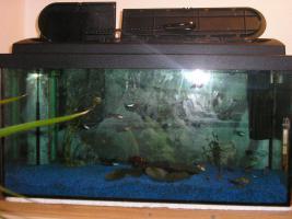 60l Aquarium mit viel Zubeh�r