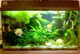 64l Aquarium mit allem Zubeh�r, Pflanzen und Fischen