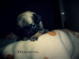 Hermine[1]