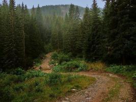 720 Hecktar Wald in Nordrumänien zu Verkaufen..,