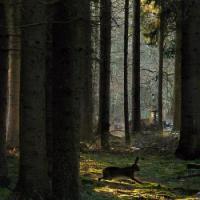Foto 2 720 Hecktar Wald in Nordrumänien zu Verkaufen..,