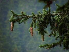 Foto 3 720 Hecktar Wald in Nordrumänien zu Verkaufen..,