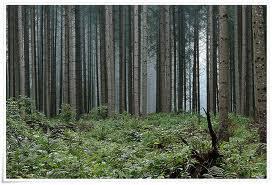 Foto 4 720 Hecktar Wald in Nordrumänien zu Verkaufen..,
