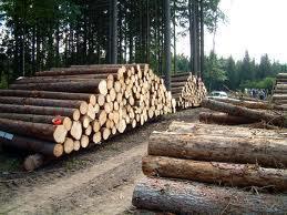 Foto 5 720 Hecktar Wald in Nordrumänien zu Verkaufen..,