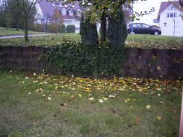 Foto 3 74831 Gundelsheim am Neckar!