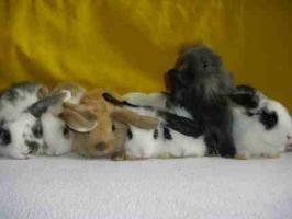 * 8 süße Kaninchenbabys *