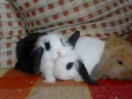 Foto 2 * 8 süße Kaninchenbabys *