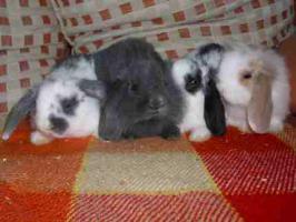 Foto 3 * 8 süße Kaninchenbabys *