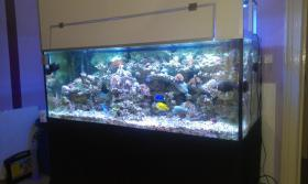 800l Meerwasseraquarium mit allem Zubehör + Tiere