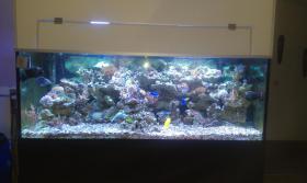 Foto 2 800l Meerwasseraquarium mit allem Zubehör + Tiere