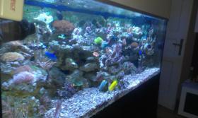 Foto 3 800l Meerwasseraquarium mit allem Zubehör + Tiere
