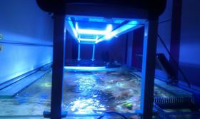 Foto 4 800l Meerwasseraquarium mit allem Zubehör + Tiere