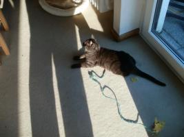 Foto 3 9 Monate Katze