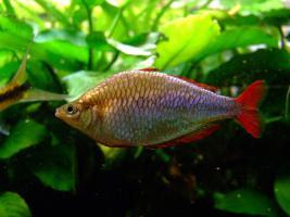 Foto 5 94469 - 300l Aquarium mit Top Ausstattung