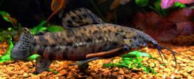 Foto 6 94469 - 300l Aquarium mit Top Ausstattung