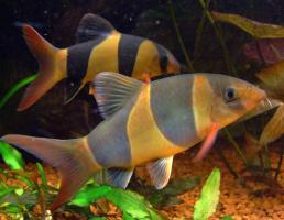 Foto 8 94469 - 300l Aquarium mit Top Ausstattung