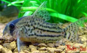 Foto 9 94469 - 300l Aquarium mit Top Ausstattung