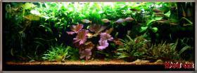 Foto 23 94469 - 300l Aquarium mit Top Ausstattung