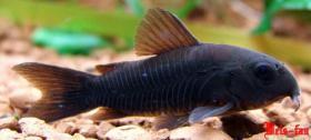 Foto 24 94469 - 300l Aquarium mit Top Ausstattung