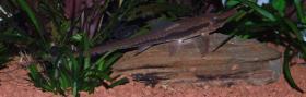 Foto 25 94469 - 300l Aquarium mit Top Ausstattung