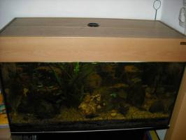 Foto 4 !!!!ALLES!!!! 100 Liter Aquarium, Unterschrank, Fisch,