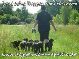 Foto 6 Achtung ! Die Mephistos erwarten am 25.April 2015 TOP-Welpen !
