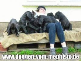 Foto 12 Achtung ! Die Mephistos erwarten am 25.April 2015 TOP-Welpen !