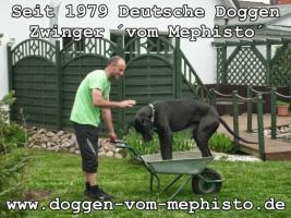Foto 19 Achtung ! Die Mephistos erwarten am 25.April 2015 TOP-Welpen !