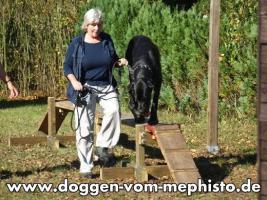 Foto 23 Achtung ! Die Mephistos erwarten am 25.April 2015 TOP-Welpen !
