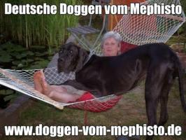 Foto 31 Achtung ! Die Mephistos erwarten am 25.April 2015 TOP-Welpen !