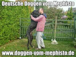 Foto 35 Achtung ! Die Mephistos erwarten am 25.April 2015 TOP-Welpen !