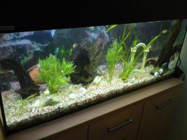 Achtung... komplett Aquarium... zum Schnäppchenpreis!!!