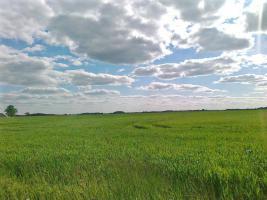 Foto 4 Ackerbaubetrieb in Lettland