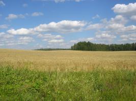 Foto 5 Ackerbaubetrieb in Lettland