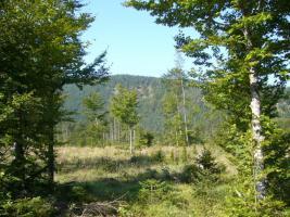 Foto 2 Ackerland + Wald zu verkaufen in Tschechien