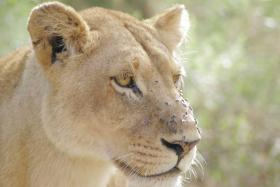 Afrika: Wilde Tiere, Warmes Wasser, Wunderbares Wandern