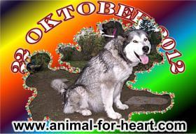 Foto 2 Alaskan Malamutewelpen v.Zwinger animalforheart zum bezahlb.Preis