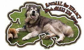 Foto 8 Alaskan Malamutewelpen v.Zwinger animalforheart zum bezahlb.Preis