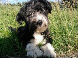 Alleinstehende Frau mit Hund sucht Wohnung in Kaiserslautern und Umgebung