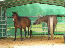 Alles für die Tierhaltung im Stall und auf der Weide