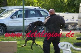 Am 16.04.2011 wurde Yette de la Arena  von  Artus de la Legion belegt