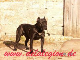 Foto 2 Am 16.04.2011 wurde Yette de la Arena  von  Artus de la Legion belegt