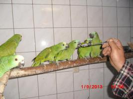 Foto 2 Amazonen