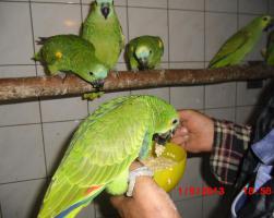 Foto 3 Amazonen