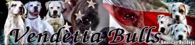 Foto 7 American Bulldog Welpen